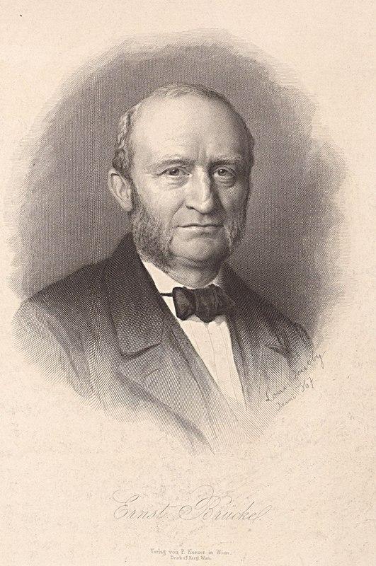 Datei:135.615 bruecke ernst wilhelm v 1819-1892 physiologie anatomie ...